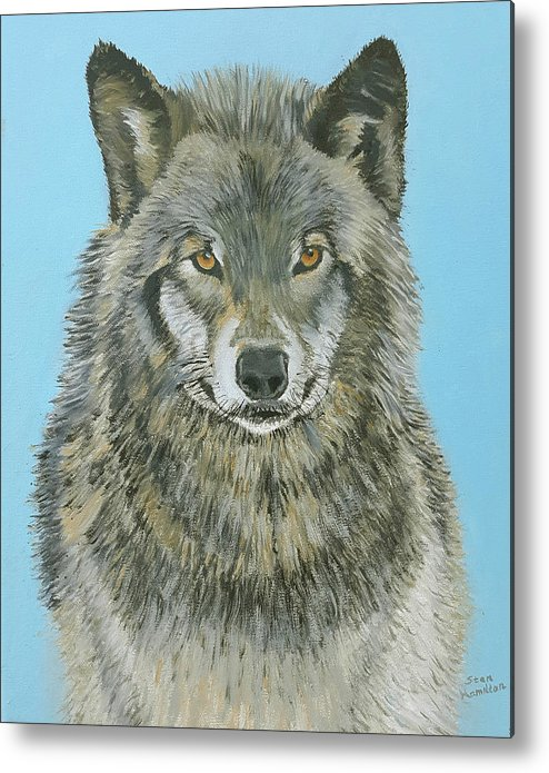 Timber Wolf Metal Print featuring the painting Timber Wolf 4 by Stan Hamilton