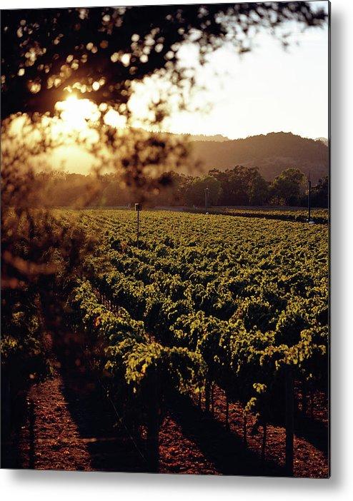 Outdoors Metal Print featuring the photograph Vineyard, Napa Valley, California, Usa by Lisa Romerein