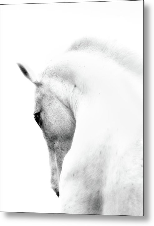 Horse Metal Print featuring the photograph White Stallion Andalusian Horse Neck by 66north