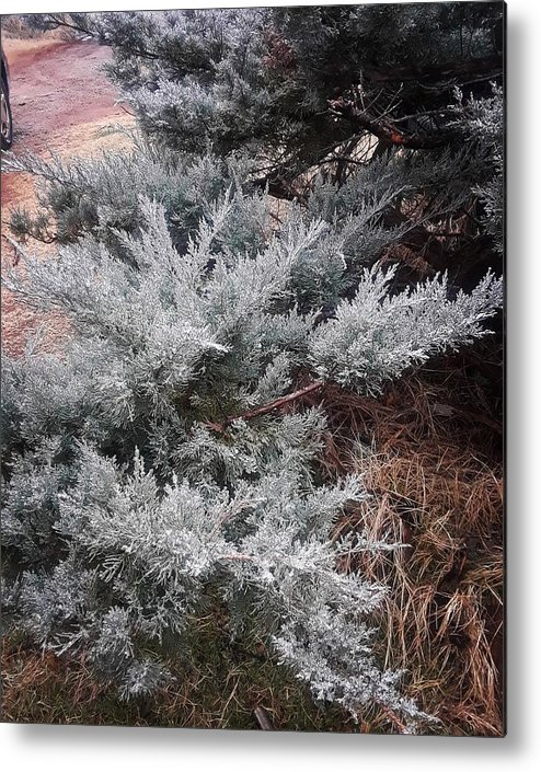 Scenery Metal Print featuring the photograph First Frost by Ariana Torralba