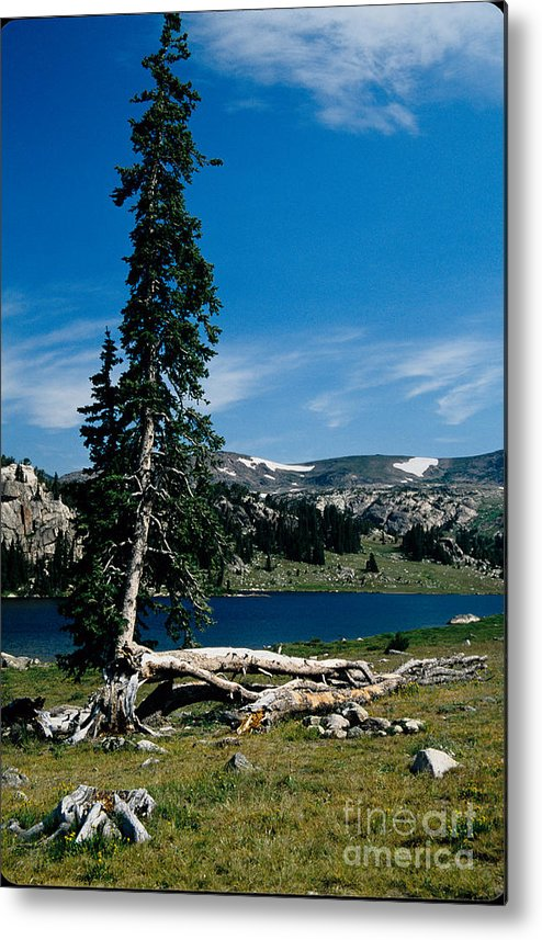 Mountains Metal Print featuring the photograph Lone Tree At Pass by Kathy McClure
