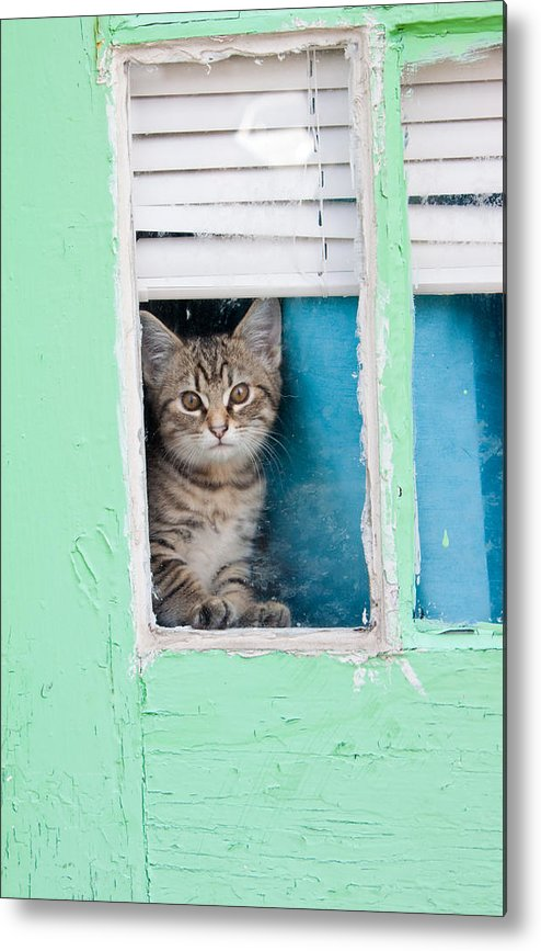 Kitty Metal Print featuring the photograph Peek-a-boo by Jean Haynes