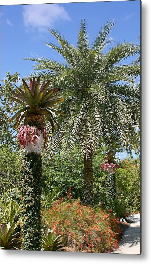 Palm Metal Print featuring the photograph Tropical Garden by Kim Hojnacki