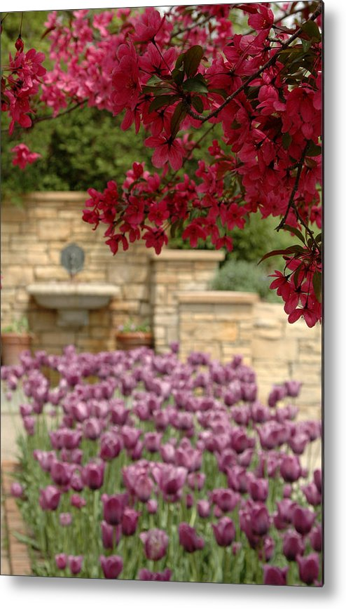 Tulips Metal Print featuring the photograph Untitled by Kathy Schumann