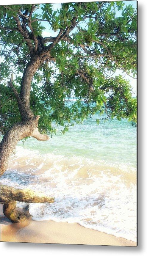 Usa Metal Print featuring the photograph Beachscape Tree by Savanah Plank