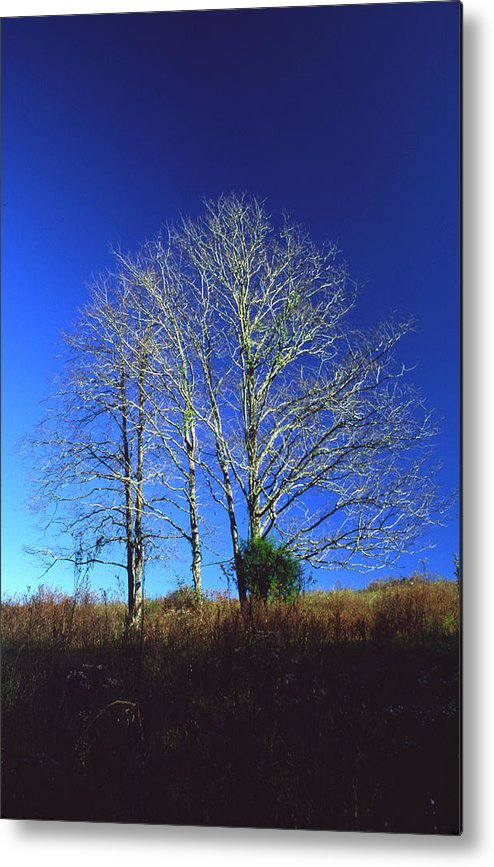 Landscape Metal Print featuring the photograph Blue Tree In Tennessee by Randy Oberg