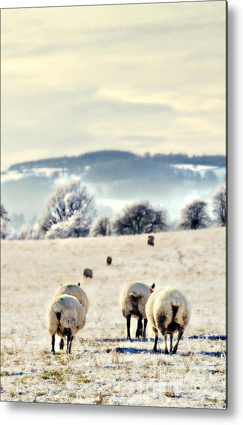 Landscape Metal Print featuring the photograph Heading Home by Meirion Matthias