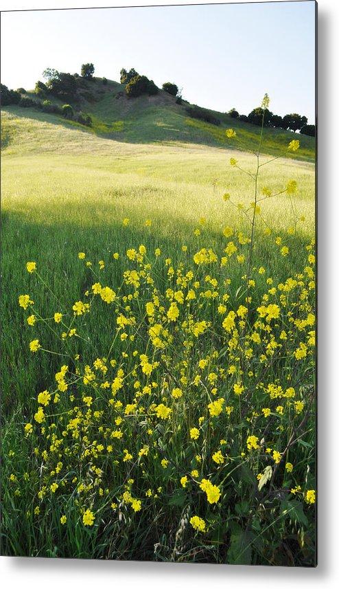 Malibu Creek Metal Print featuring the photograph Malibu Creek Wildflowers by Kyle Hanson
