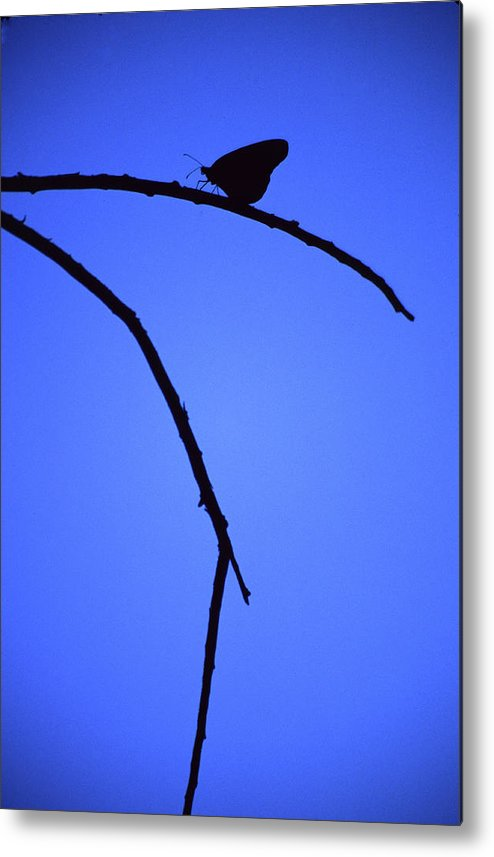 Nature Metal Print featuring the photograph Natures Elegance by Randy Oberg