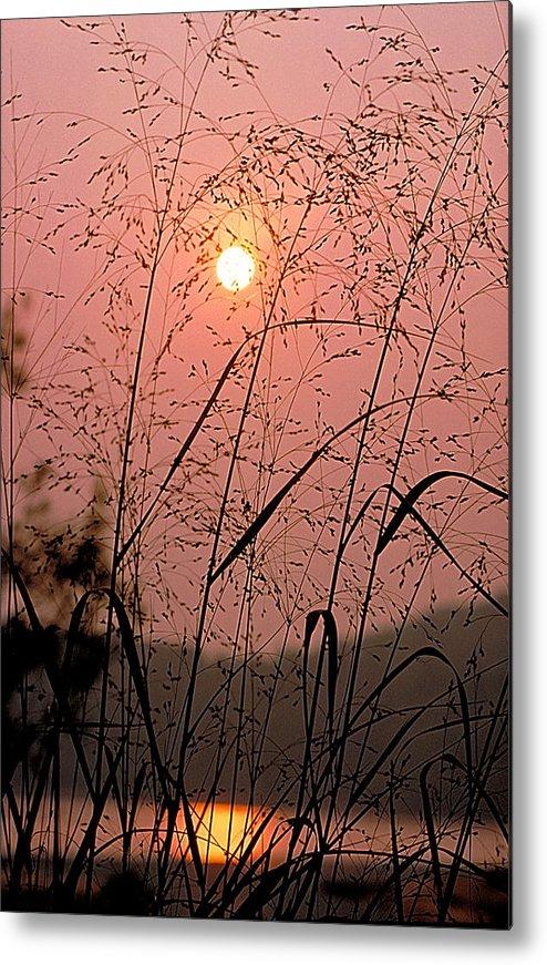 Sun Metal Print featuring the photograph Sunrise Through The Tall Grass by Thomas Firak