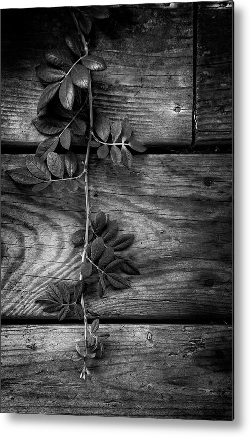Barn Metal Print featuring the photograph Vine On Barn by Greg Mimbs