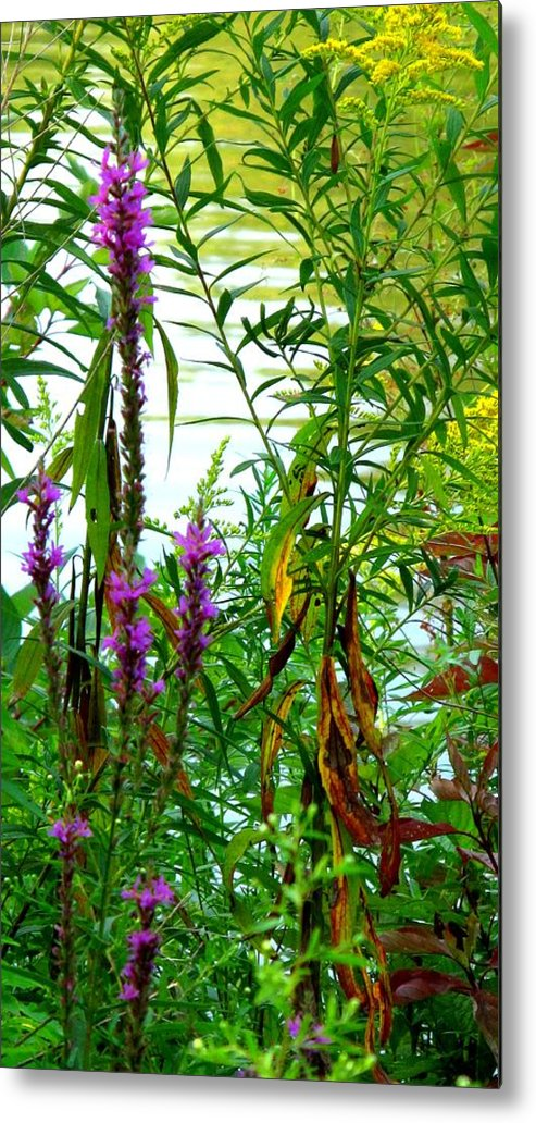 Purple Metal Print featuring the photograph Purple And Yellow by Ian MacDonald