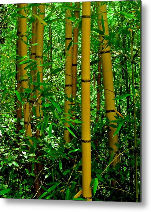 Bamboo Metal Print featuring the photograph Bamboo by Dana Doyle