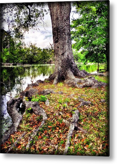 Fall Metal Print featuring the photograph Fall In Audubon Park by Ray Devlin