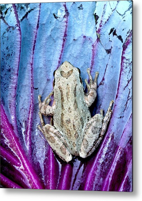 Jeannoren Metal Print featuring the photograph Frog On Cabbage by Jean Noren