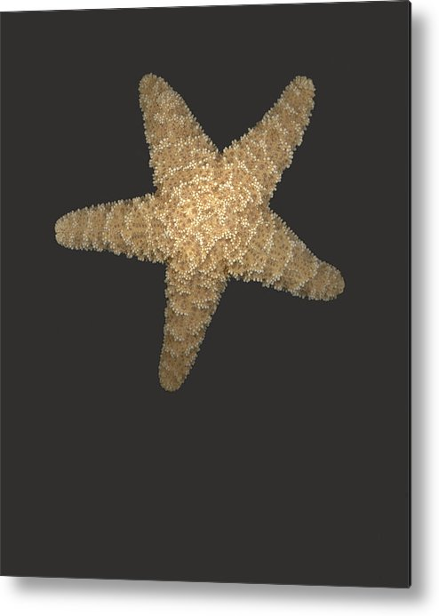 Starfish Metal Print featuring the photograph Solo Starfish I by Suzanne Gaff