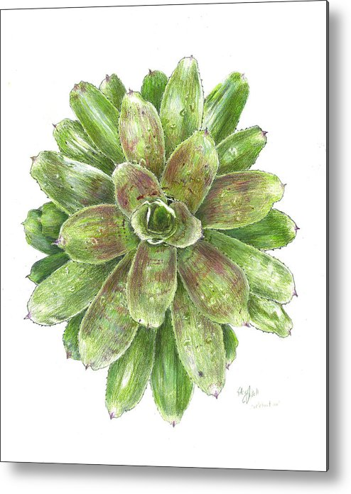 Neoregelia Metal Print featuring the drawing Celebration by Steve Asbell