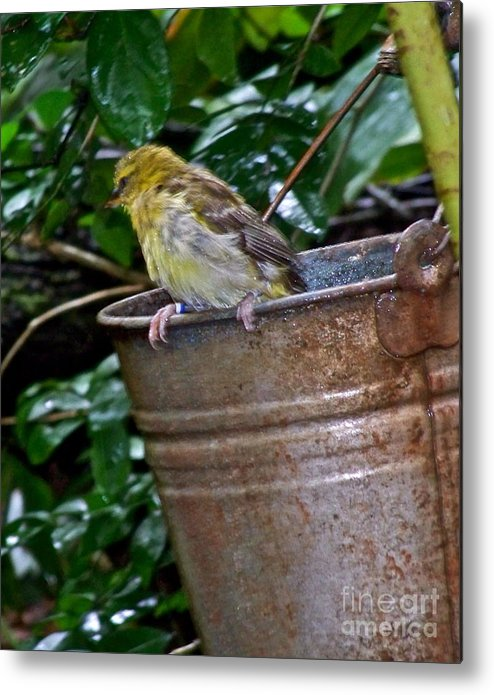 Bird Metal Print featuring the photograph After The Bath by Carol Bradley