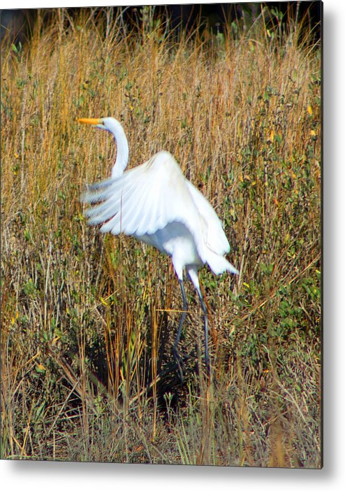 Marsh Metal Print featuring the photograph Great White Egret by Jennifer Stockman