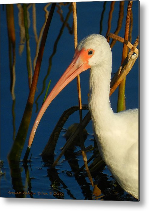 Habitat Metal Print featuring the digital art White Ibis by Grace Dillon