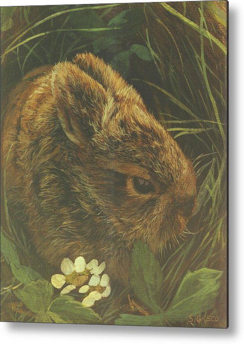 Wildlife Metal Print featuring the painting Cottontail Young by Steve Greco