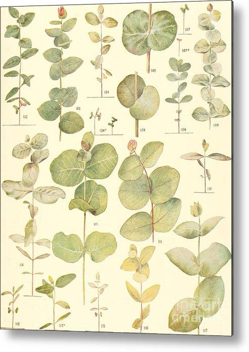 Botanical Metal Print featuring the digital art Vintage Botanical Illustration by Alexandr Testudo