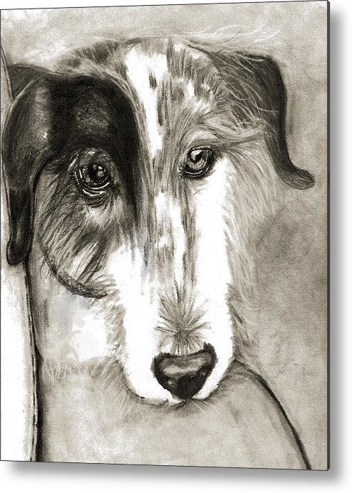 Dog Metal Print featuring the drawing Blue by Crystal Suppes