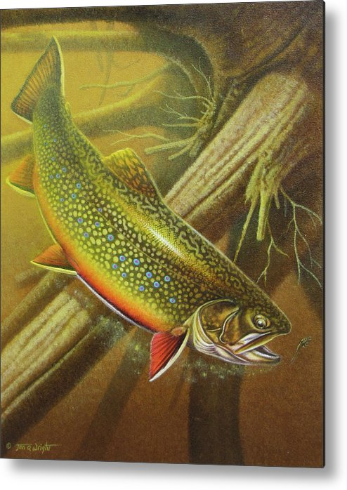 Jon Q Wright Brook Trout Fly Fishing Fly Fish Fishing Nymph Stream River Lake Metal Print featuring the painting Brook Trout Cover by JQ Licensing