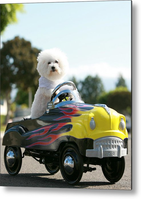 Alternative Energy Metal Print featuring the photograph Fifi Goes For A Car Ride by Michael Ledray