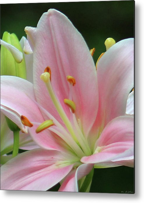 Lily Metal Print featuring the digital art Inside The Lily by Mark StJohn
