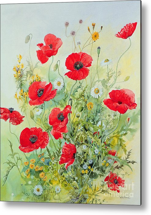 Flowers; Botanical; Flower; Poppies; Mayweed; Leaf; Leafs; Leafy; Flower; Red Flower; White Flower; Yellow Flower; Poppie; Mayweeds Metal Print featuring the painting Poppies And Mayweed by John Gubbins