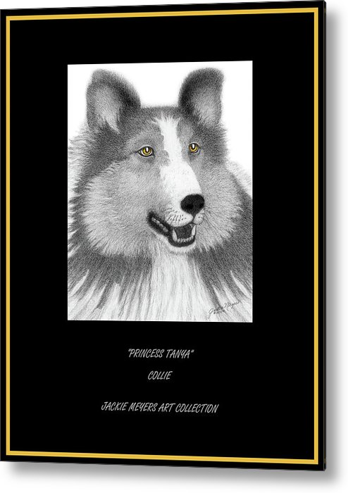 Collie Keywords Herding Metal Print featuring the drawing Princess Tanya by Jackie Meyers