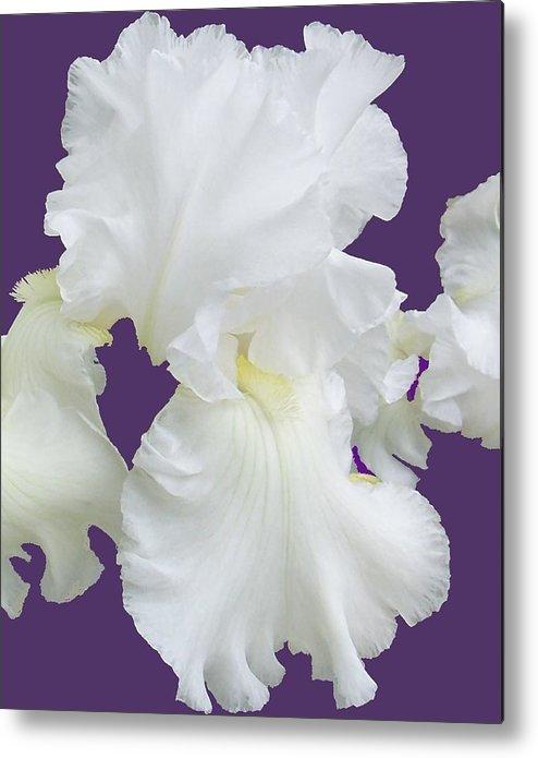 Iris Metal Print featuring the photograph Regal Iris by Ellen B Pate