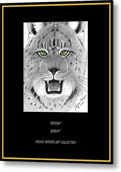 Lynx Metal Print featuring the drawing Sheena by Jackie Meyers