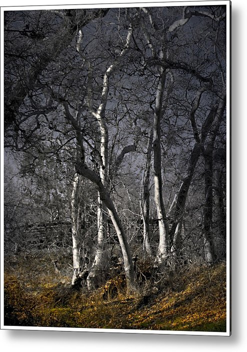 Landscape Metal Print featuring the photograph Sycamore Grove by Karen W Meyer