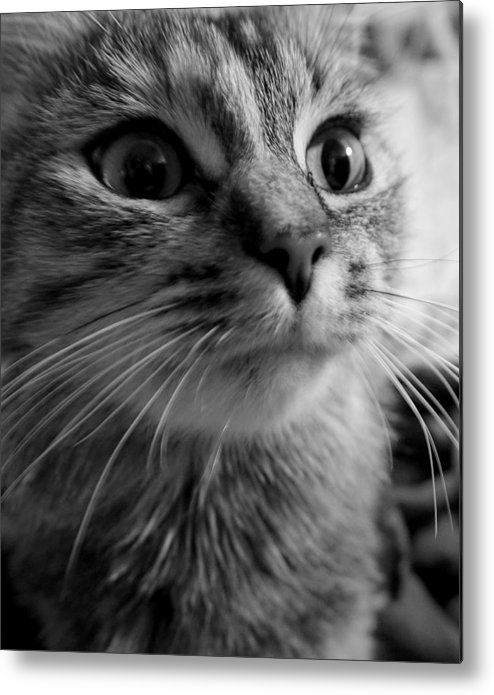 Cat Metal Print featuring the photograph Whered Ya Get Those Peepers by Lori Pessin Lafargue