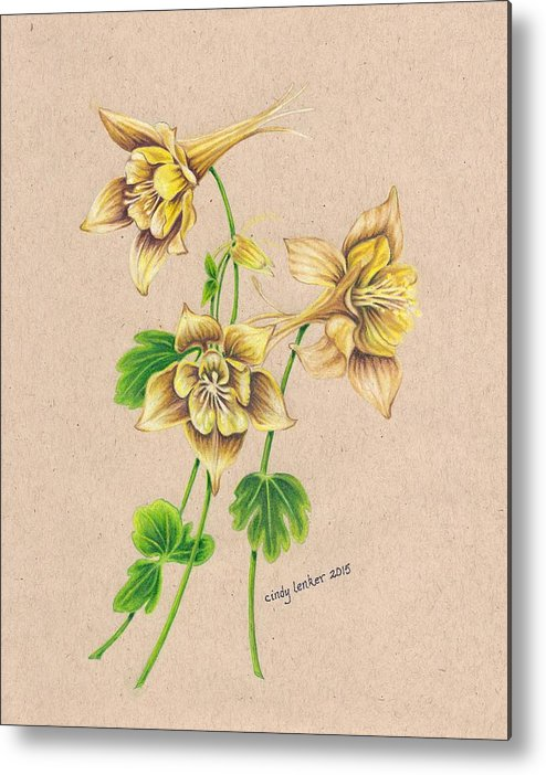 Watercolor Pencil Metal Print featuring the painting Yellow Columbines by Cindy Lenker