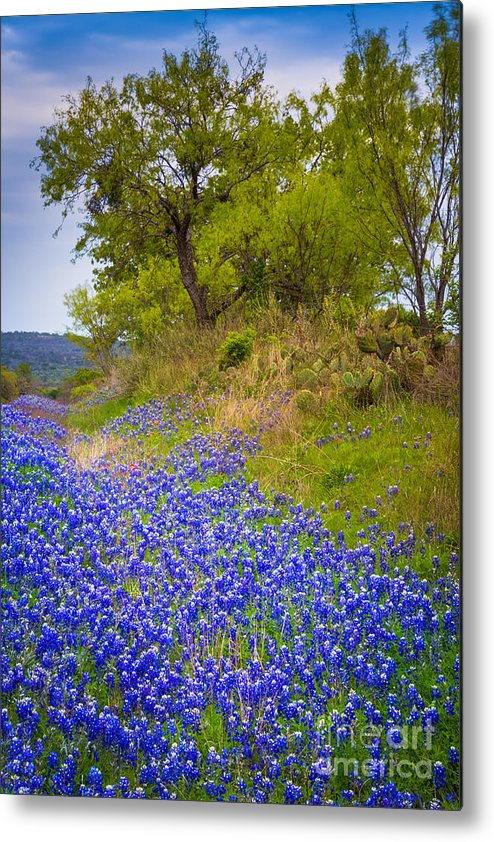 America Metal Print featuring the photograph Bluebonnet Meadow by Inge Johnsson
