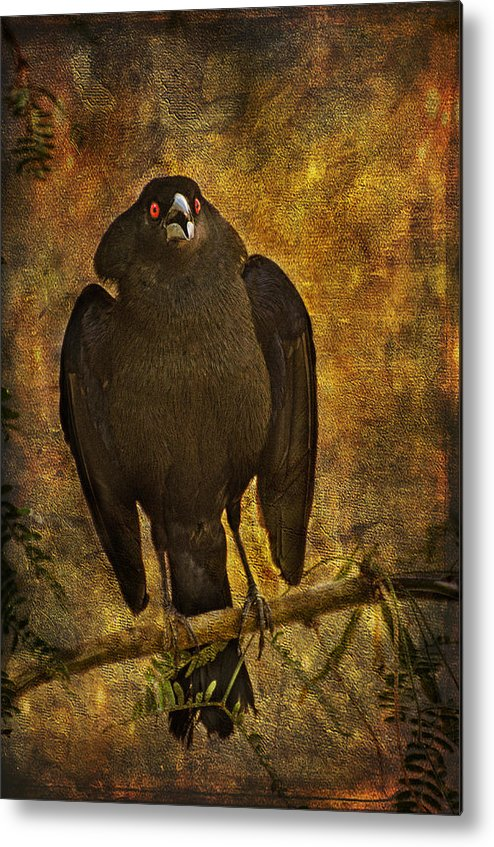 Birds Metal Print featuring the photograph Bronzed Cowbird by Barbara Manis