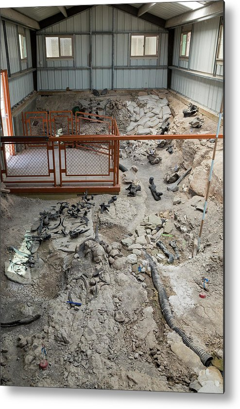Fossil Metal Print featuring the photograph Cleveland-lloyd Dinosaur Quarry Fossils by Jim West