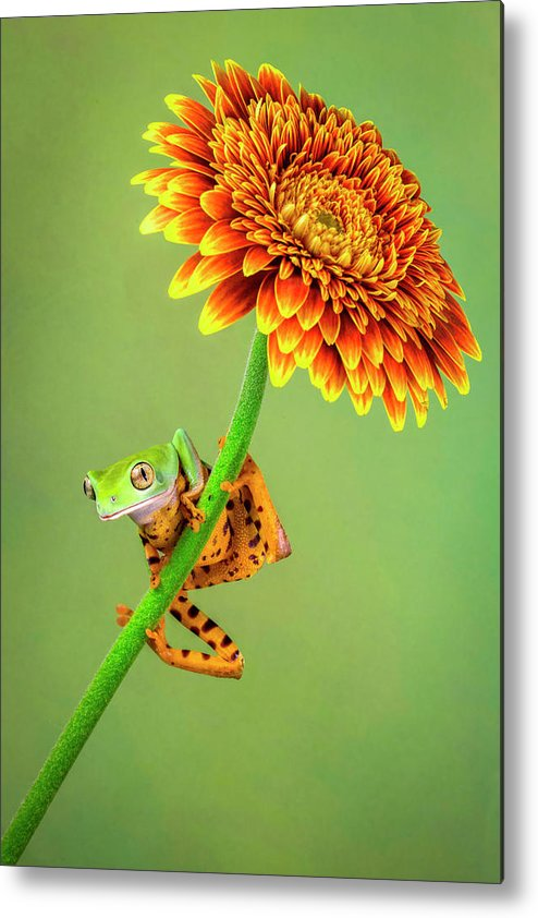 Tiger Metal Print featuring the photograph Just Hanging Around by Renee Doyle