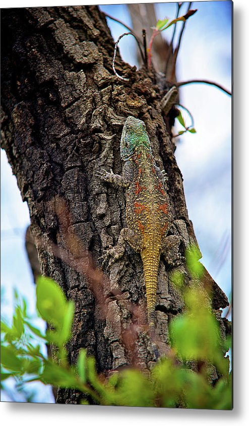 Africa Metal Print featuring the photograph African Reptiles by Shannon Benson