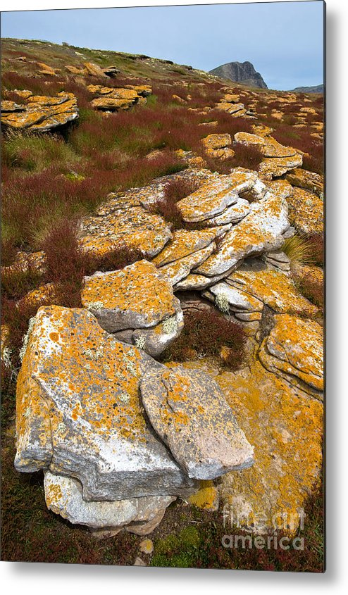 Lichen Metal Print featuring the photograph Lichened Rocks by John Shaw