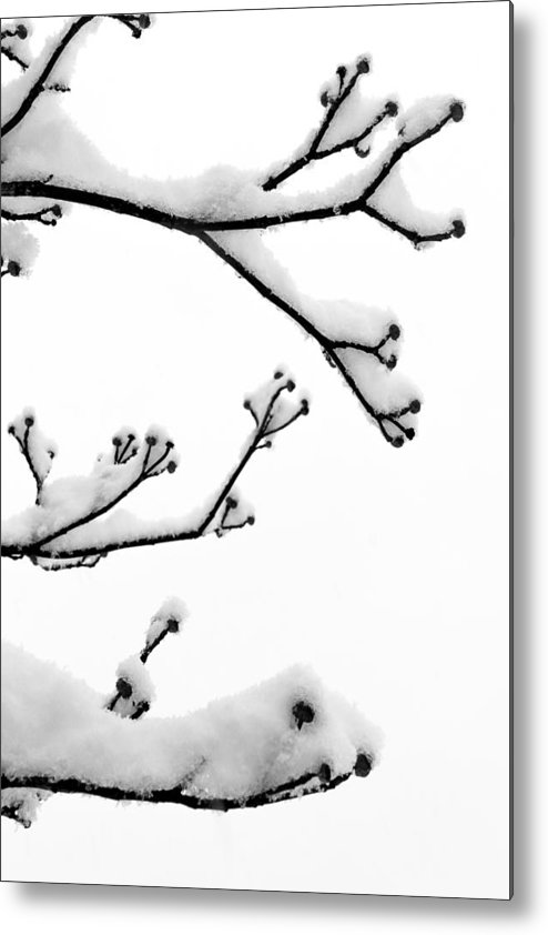 B&w Metal Print featuring the photograph Snow Cover by Gaurav Singh