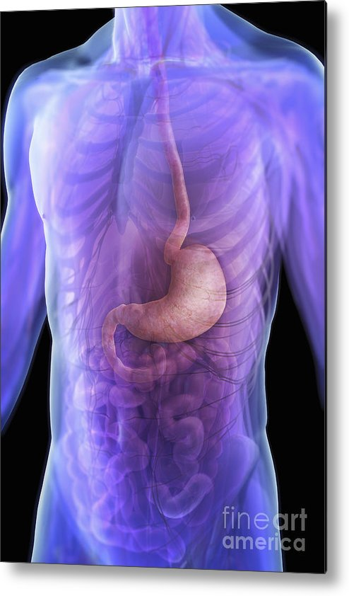 Transparent Metal Print featuring the photograph The Stomach by Science Picture Co