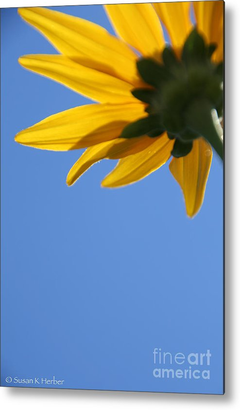 Flower Metal Print featuring the photograph Sunny Petals by Susan Herber