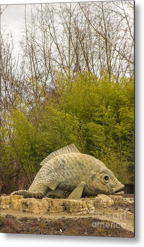 Fish Metal Print featuring the photograph A Fish Out Of Water by Calazone's Flics
