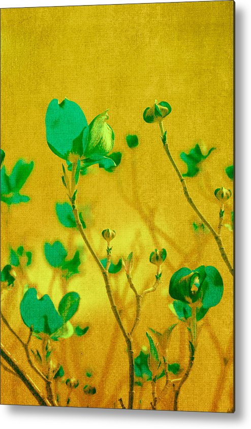 Freesia Metal Print featuring the photograph Abstract Dogwood by Bonnie Bruno