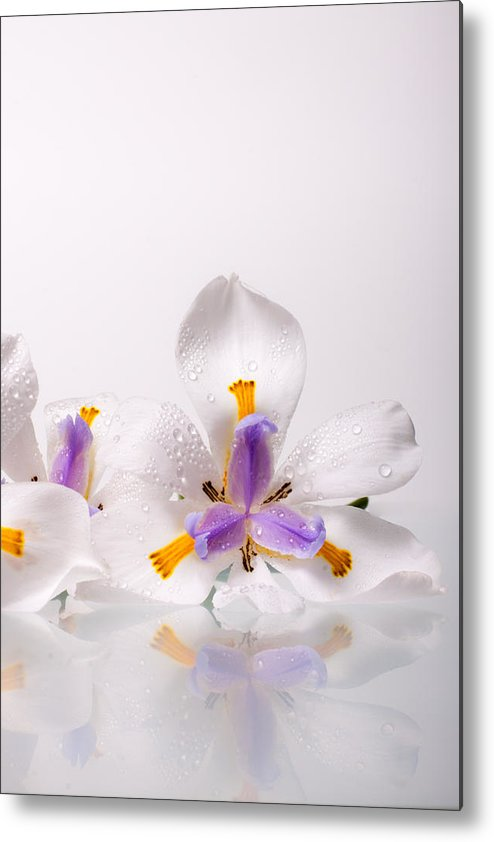 Iris Metal Print featuring the photograph African Irises Ix by W Chris Fooshee