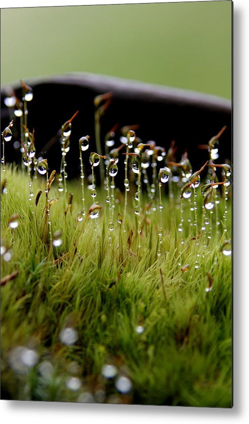 Landscape Metal Print featuring the photograph After The Rain by Pam Drago